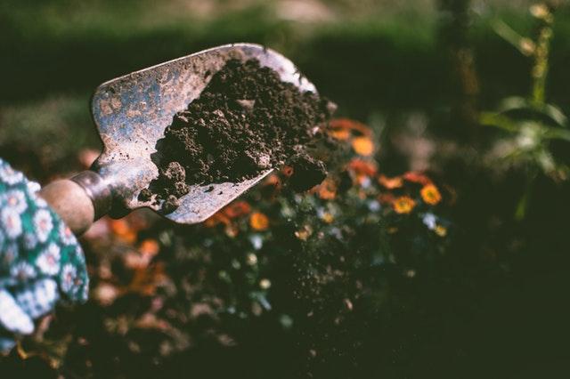 Blog niche ideas - Gardening